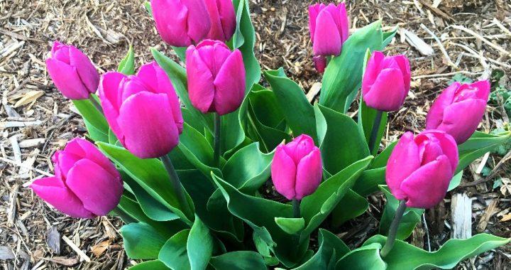 spring in colorado