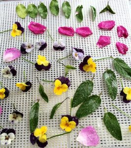 Edible Flower Feast