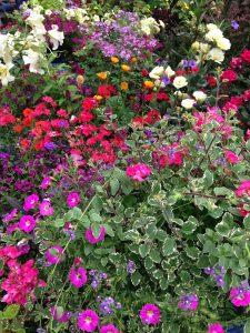 colorado Gardening