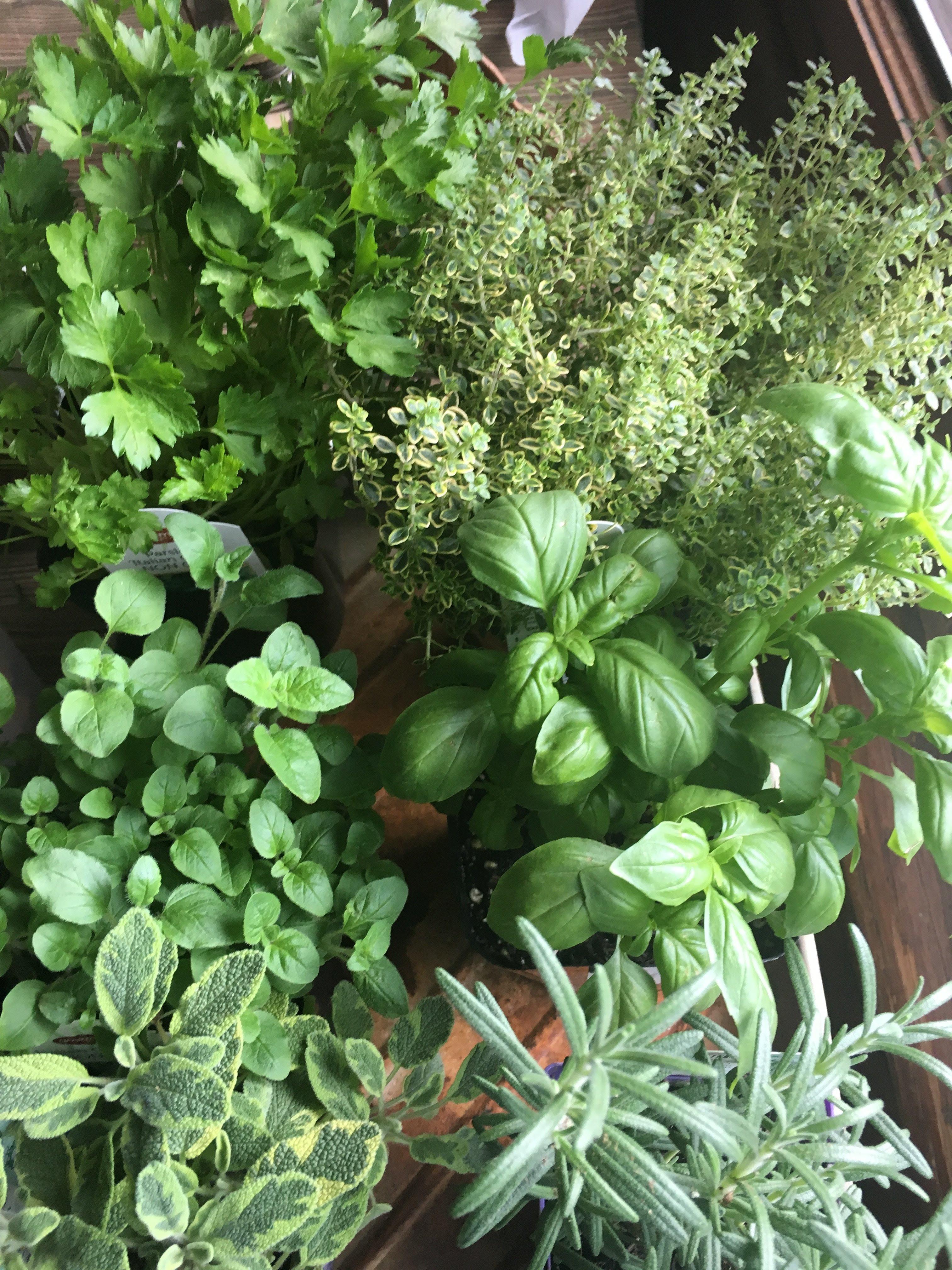 Garden Herb Blend- dried herbs