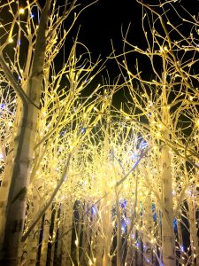 Denver Botanic Gardens Blossoms of Light