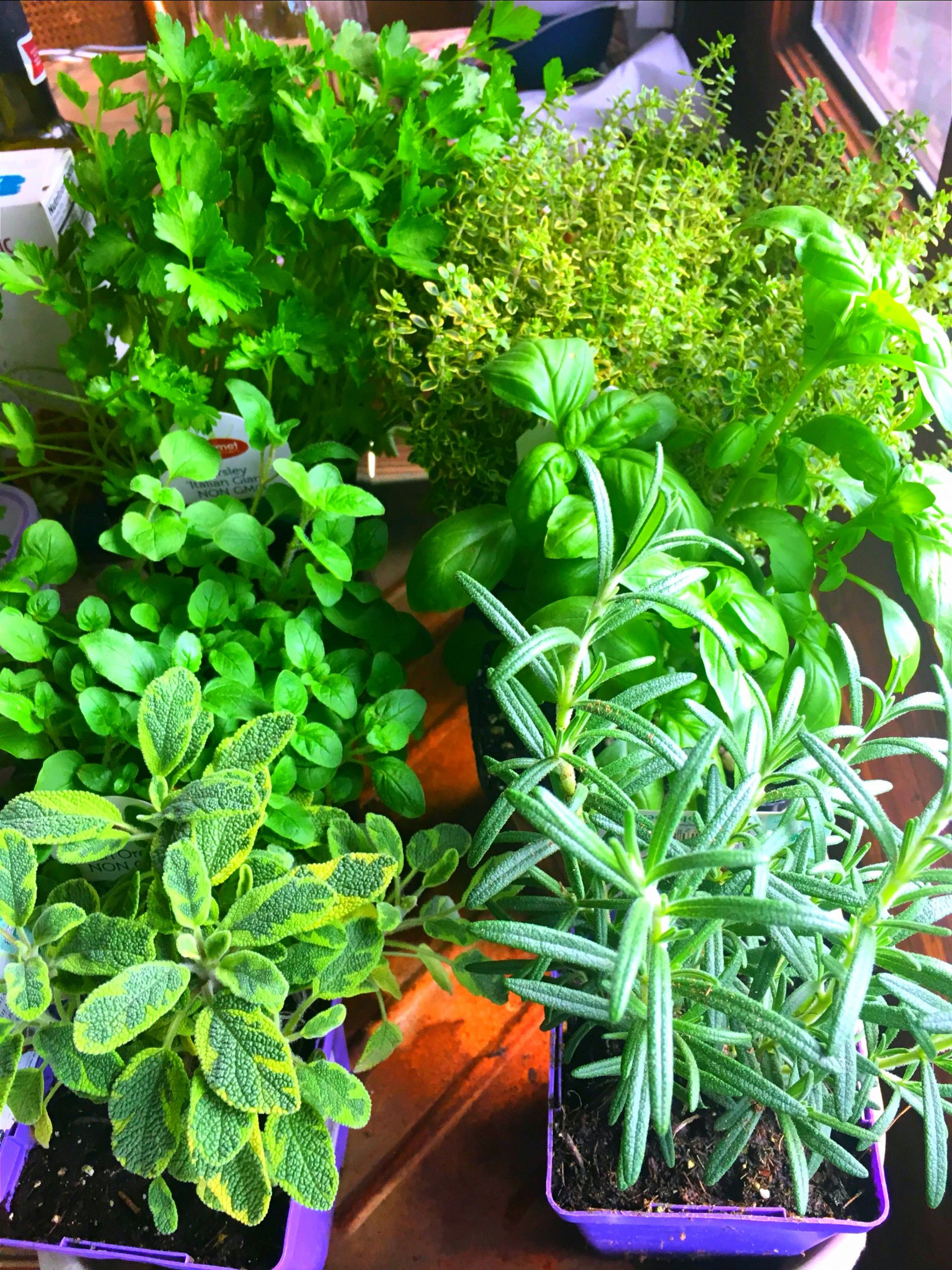 Herbal Home and Garden, Workshop and Luncheon