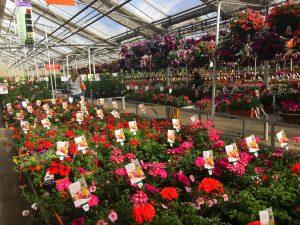 Colorado Garden Centers still have a great assortment