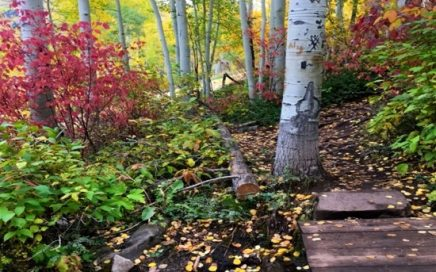 fall path in colorado